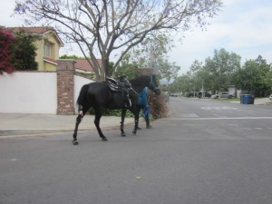 Many horses walk the streets in Rancho Burbank. It's like you're not in the City.